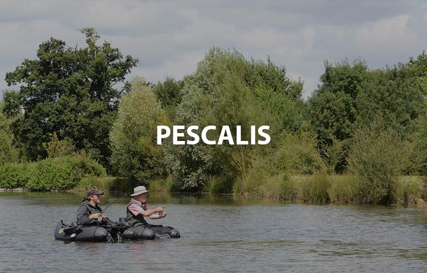 Pescalis