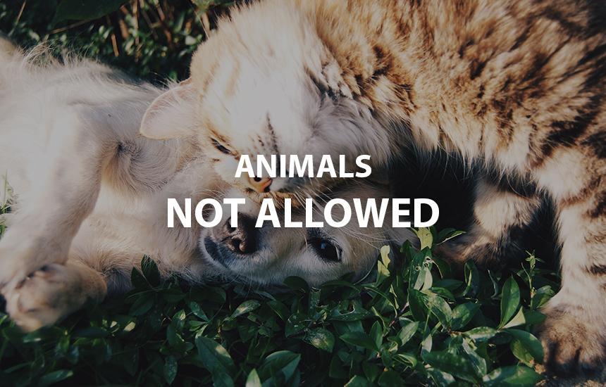 Animals not allowed
